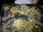 fish festival